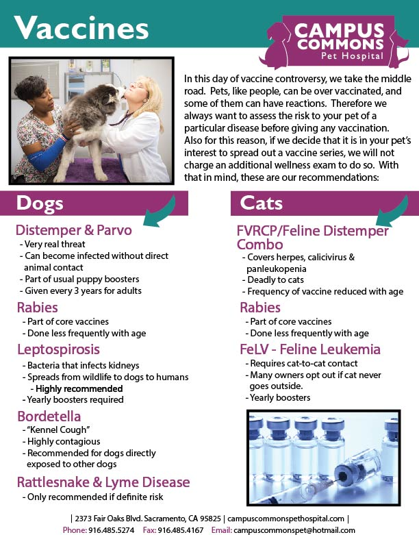 Dog Cat Vaccines Flyer 2 Campus Commons Pet Hospital