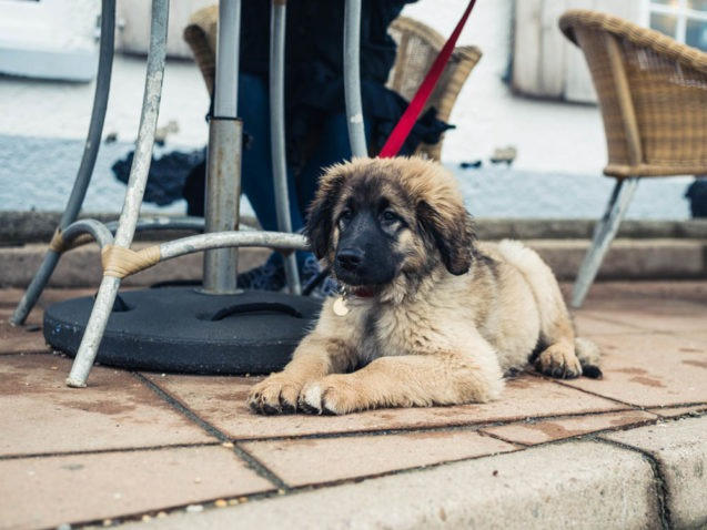 Dog-Friendly Places in Sacramento | Campus Commons Pet Hospital